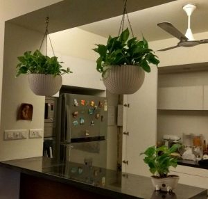 Kitchen Hanging Basket Planters