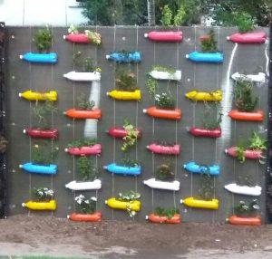 Planting Bottles