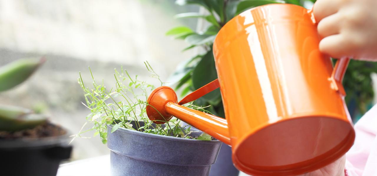 How to Clean Your Indoor Houseplants