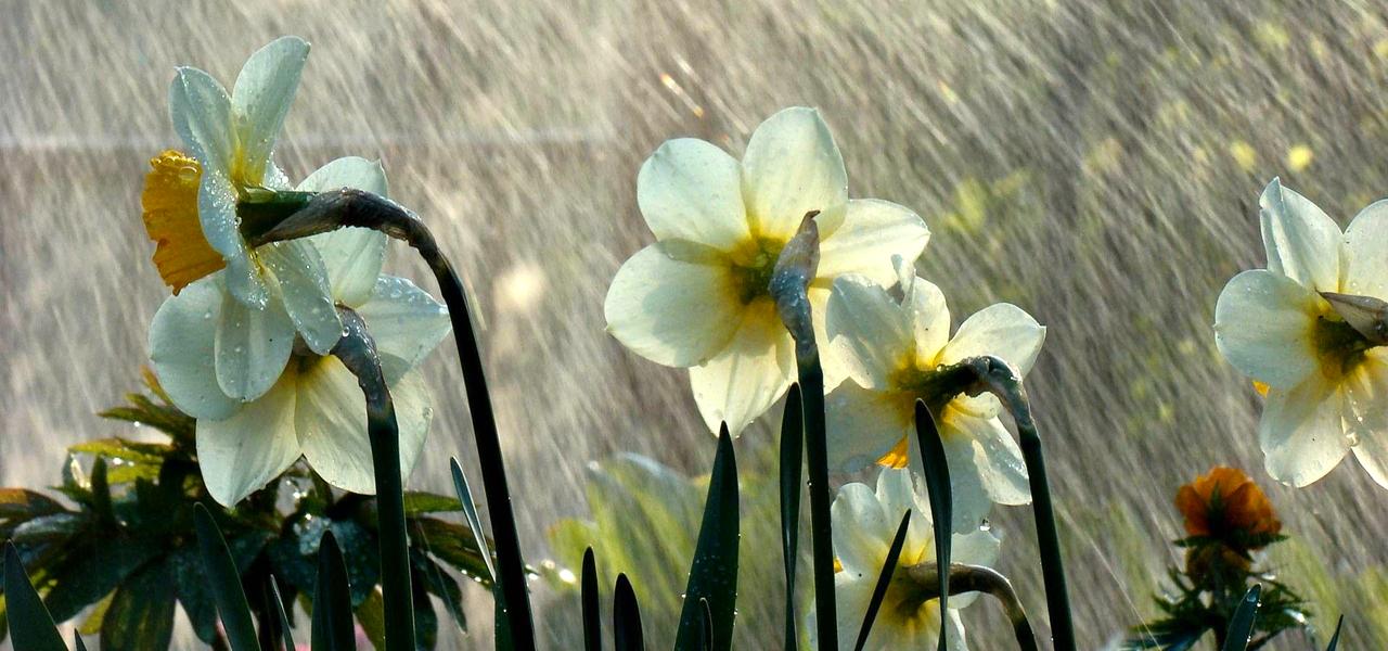 Tips For Gardening in Monsoon