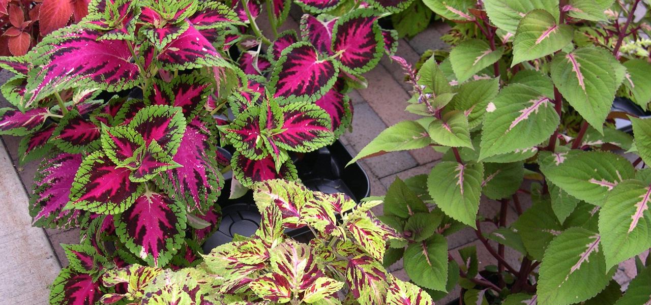 Outdoor Plants That You Can Grow Indoor