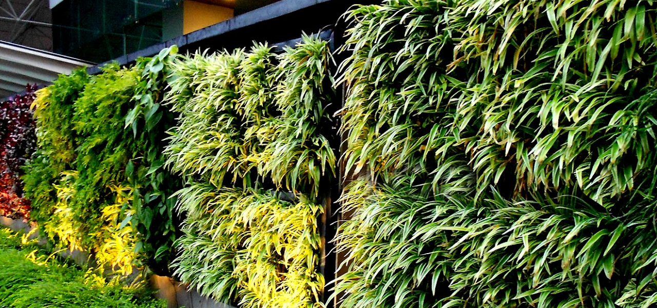 Tips To Maintain a Vertical Garden