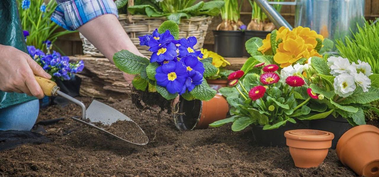 Tips for Maintaining a Healthy Garden